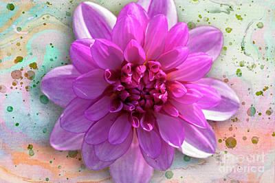 Photograph - Dahlia Flower Series One by Heiko Koehrer-Wagner