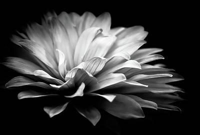 Photograph - Dahlia Flower Shadow by Athena Mckinzie