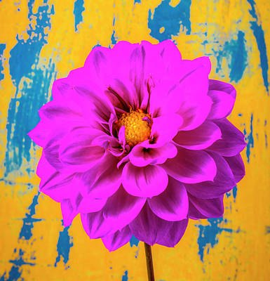 Photograph - Dahlia Flower Still Life by Garry Gay