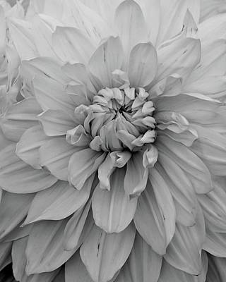 Photograph - Dahlia In Black And White by Patricia Strand