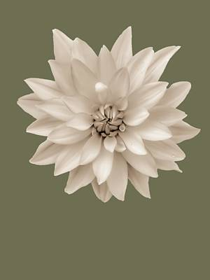 Abstract Flower Photograph - Dahlia In Sepia On Herb Green by Heather Joyce Morrill