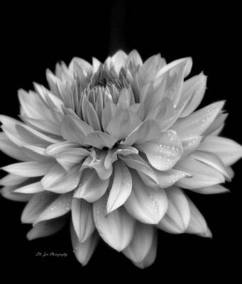 Photograph - Dahlia In The Rain by Jeanette C Landstrom