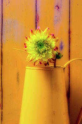 Old Pitcher Photograph - Dahlia In Yellow Pitcher by Garry Gay
