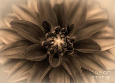 Photograph - Dahlia by Judy Wolinsky