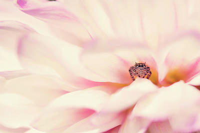 Photograph - Dahlia Jumper by Erica Kinsella