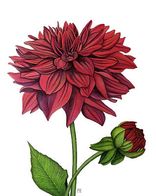 Wall Art - Painting - Dahlia by Kristina Spitzner