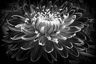 Photograph - Dahlia Macro In Black And White by Kay Novy