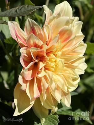 Photograph - Dahlia Named Advance by J McCombie