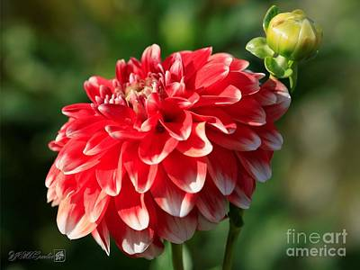 Photograph - Dahlia Named Be A Sport by J McCombie