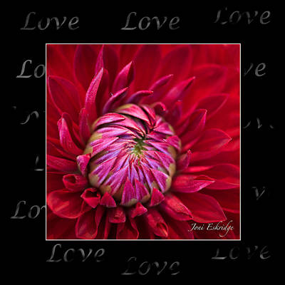 Photograph - Dahlia Of Love by Joni Eskridge
