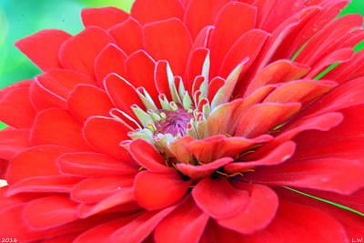 Photograph - Dahlia Petals by Lisa Wooten