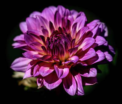 Photograph - Dahlia Purple by Athena Mckinzie