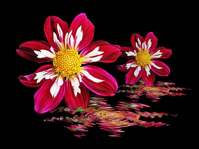 Photograph - Dahlia Reflections by Gill Billington