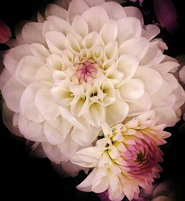 Photograph - Dahlia Sensation by Bruce Bley