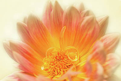 Photograph - Dahlia Series #1/5 by Patti Deters
