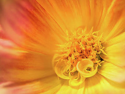 Photograph - Dahlia Series #2/5 by Patti Deters