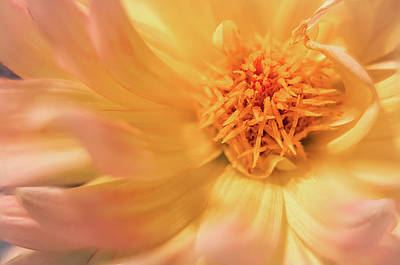 Photograph - Dahlia Series #5/5 by Patti Deters