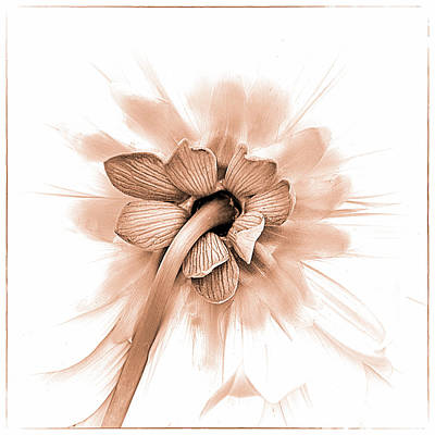Dahlia Shyness Art Print by Julie Palencia