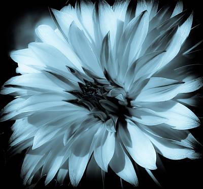 Photograph - Dahlia Soft Blue by Athena Mckinzie
