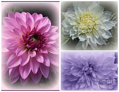 Photograph - Dahlia Splendor - A Collage by Dora Sofia Caputo Photographic Design and Fine Art