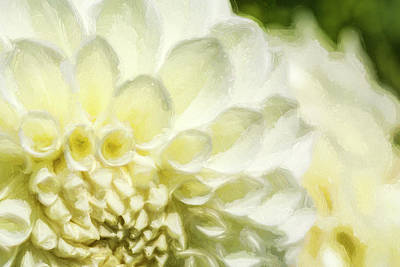 Photograph - Dahlia Study 4 Painterly by Scott Campbell