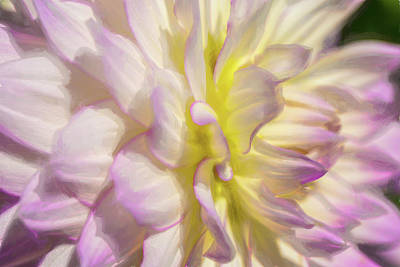 Photograph - Dahlia Study 5 Painterly  by Scott Campbell