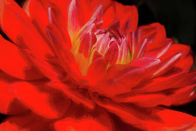 Photograph - Dahlia Study 6 Painterly by Scott Campbell