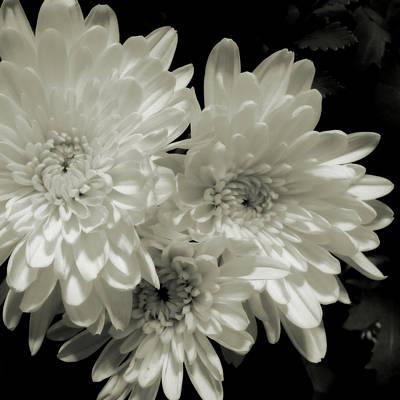 Photograph - Dahlia Trio by Scott Kingery