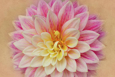 Photograph - Dahlia With Golden Background by Mary Jo Allen
