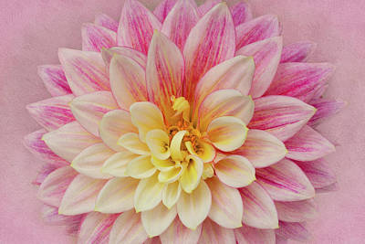Photograph - Dahlia With Pink Texture by Mary Jo Allen