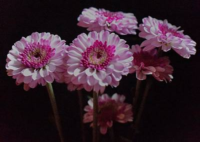 Photograph - Dahlias By The Half Dozen by Lynda Anne Williams