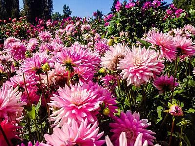 Photograph - Dahlias Garden by Cesar Vieira