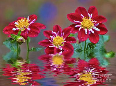 Photograph - Dahlias In Water by Mimi Ditchie