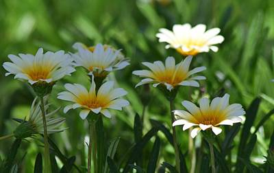 Photograph - Dainty Daisies By The Half Dozen by Lynda Anne Williams