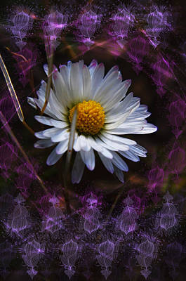 Photograph - Dainty Daisy by Adria Trail