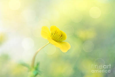 Photograph - Dainty Delight by Kelly Nowak