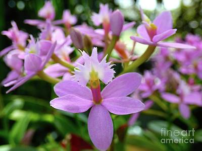 Photograph - Dainty Orchid by Jean Wright