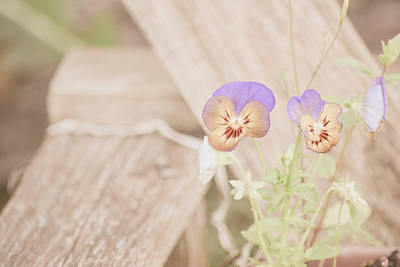 Photograph - Dainty Pansies by Bonnie Bruno