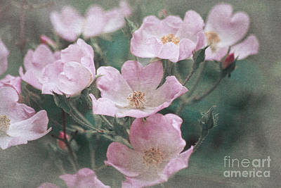 Photograph - Dainty Pink Roses by Jim And Emily Bush