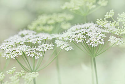 Photograph - Dainty White Flowers Green by Jennie Marie Schell
