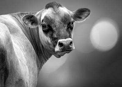 Sacred Art Photograph - Dairy Cow Elsie by Bob Orsillo