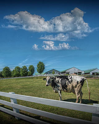 Photograph - Dairy Cow In A Pasture In West Michigan by Randall Nyhof