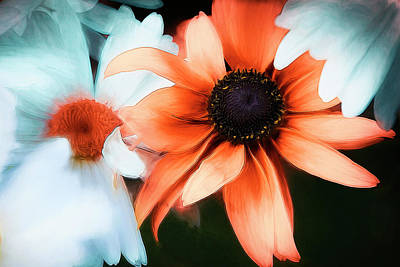 Photograph - Daises by Maria Coulson