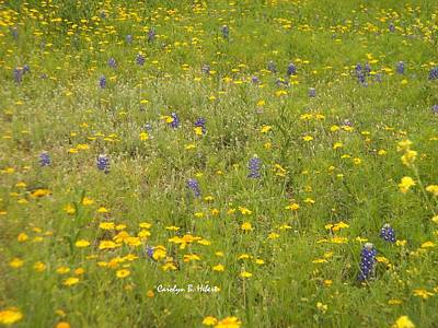 Wall Art - Photograph - Field Of Daisies And Bluebonnets by Carolyn Hebert
