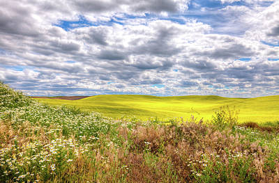 Photograph - Daisies And Canola by David Patterson