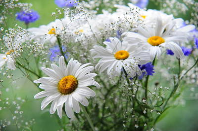 Photograph - Daisies And Cornflowers Bouquet by Jenny Rainbow