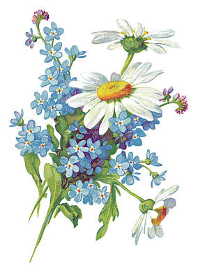 Daisy Drawing - Daisies And Forget-me-nots by Neil Baylis