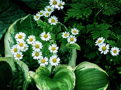 Photograph - Daisies And Hosta In Colour by Bill Linn