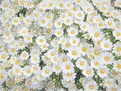 Photograph - Daisies by Andrea Anderegg