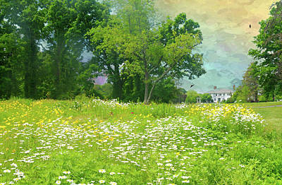 Photograph - Daisies At Crawford by Diana Angstadt